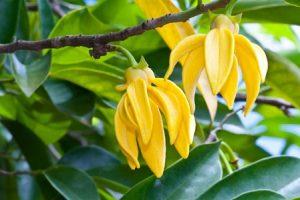 โครงสร้าง Deeper! Vibro Gel — Cananga odorata