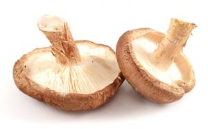 เห็ดชิตาเกะ (Lentinula edodes) — องค์ประกอบของ Hypertonium