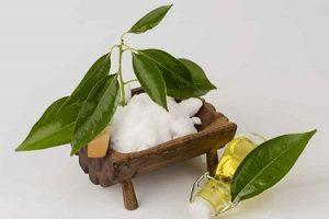 สารสกัดจากต้นการบูร (Cinnamomum camphora) — โครงสร้าง ArthroNEO Thailand