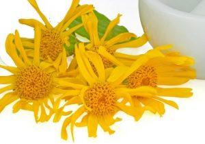 สารออกฤทธิ์จาก ดอกอาร์นิคามอนทานา (Arnica montana) — โครงสร้าง ArthroNEO Thailand